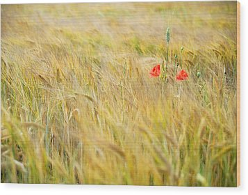 Poppies Wood Print by Guido Montanes Castillo