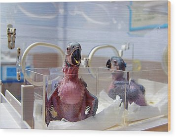Safari Park Animal Hospital Wood Print