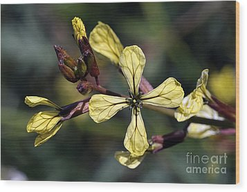 Wood Print featuring the photograph Spring Wild Flower by George Atsametakis
