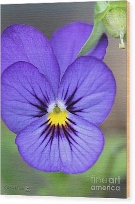Viola Named Sorbet Blue Heaven Jump-up Wood Print by J McCombie
