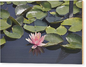Water Lily Wood Print by Dottie Branchreeves