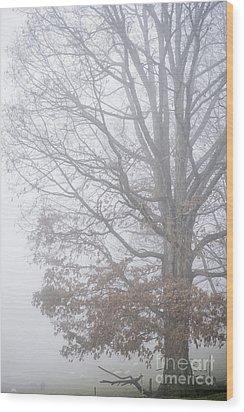 White Oak Tree In Fog Wood Print by Thomas R Fletcher