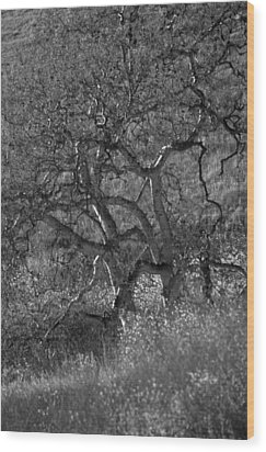50 Shades Of Gray Trees Wood Print