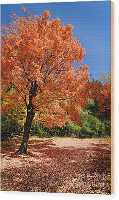 A Blanket Of Fall Colors Wood Print by Amy Cicconi