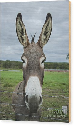 Animal Personalities Friendly Quirky Donkey Face Close Up Wood Print by Jani Bryson