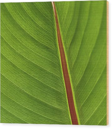 Banana Leaf Wood Print by Heiko Koehrer-Wagner