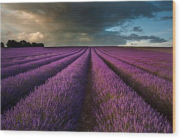 Beautiful Lavender Field Landscape With Dramatic Sky Wood Print by Matthew Gibson
