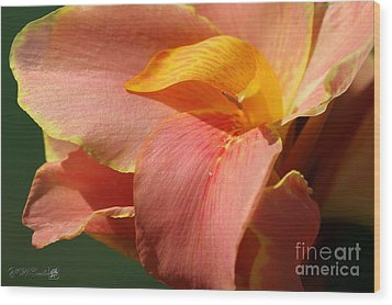 Dwarf Canna Lily Named Corsica Wood Print by J McCombie