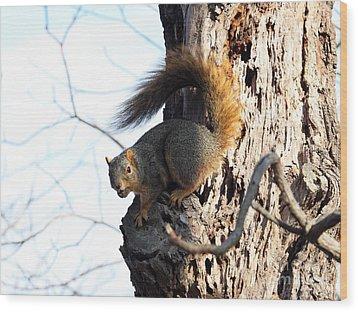 Eastern Fox Squirrel Wood Print by Jack R Brock