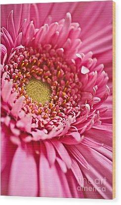 Gerbera Flower Wood Print by Elena Elisseeva