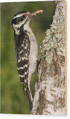 Hairy Woodpecker Wood Print by Linda Freshwaters Arndt