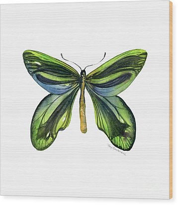 6 Queen Alexandra Butterfly Wood Print by Amy Kirkpatrick