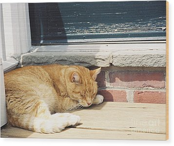 #665 03 Catnap  Wood Print by Robin Lee Mccarthy Photography