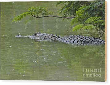 American Alligator Wood Print by Mark Newman
