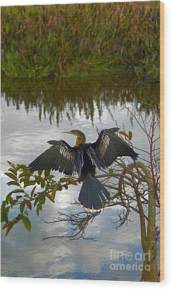 Anhinga Wood Print by Mark Newman