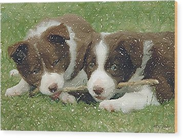 Border Collie Dog Portrait Wood Print by Olde Time  Mercantile