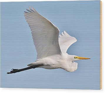 Great White Egret In Flight Wood Print by Paulette Thomas