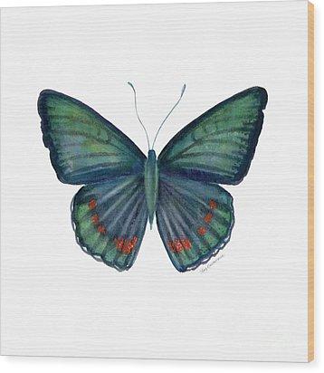 82 Bellona Butterfly Wood Print by Amy Kirkpatrick
