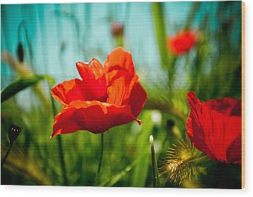 Poppy Field And Sky Wood Print by Raimond Klavins