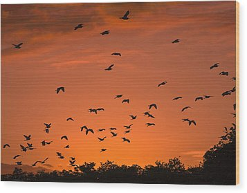 Birds At Sunset Wood Print by Sally Weigand