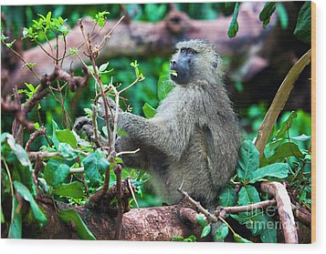 A Baboon In African Bush Wood Print by Michal Bednarek