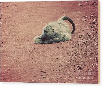 A Baboon On African Road Wood Print by Michal Bednarek
