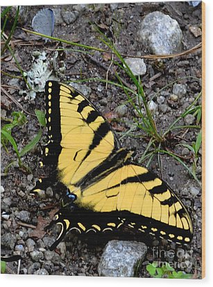A Beautiful Swallowtail Butterfly Wood Print by Eva Thomas