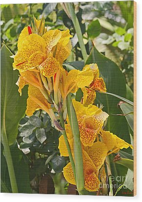 A Beautiful Yellow Canna Lilly Wood Print by Kenny Bosak