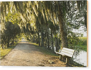 A Bench Under Golden Spanish Moss Wood Print by Ellie Teramoto
