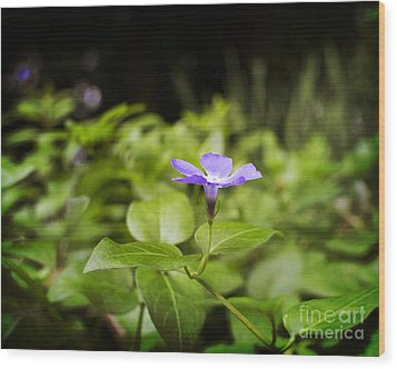 Wood Print featuring the photograph A Bit Of Purple by Maria Janicki