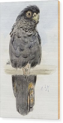 A Black Cockatoo Wood Print by Henry Stacey Marks
