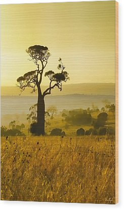 A Boab Sunrise Wood Print by Holly Kempe