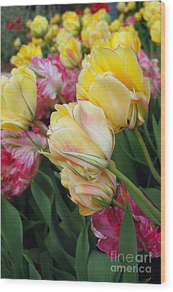 A Bouquet Of Tulips For You Wood Print by Eva Kaufman