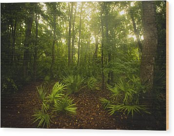 A Bright Morning Wood Print by J Riley Johnson