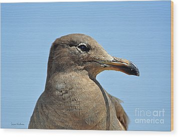 A Brown Gull In Profile Wood Print by Susan Wiedmann