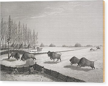 A Buffalo Pound Wood Print by George Back