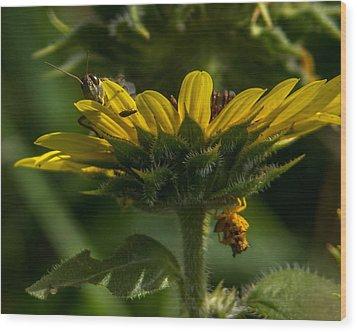 A Bugs World Wood Print
