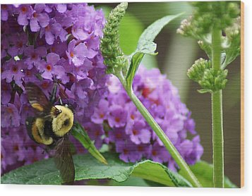 A Bumblebee In The Garden Wood Print by Kim Pate