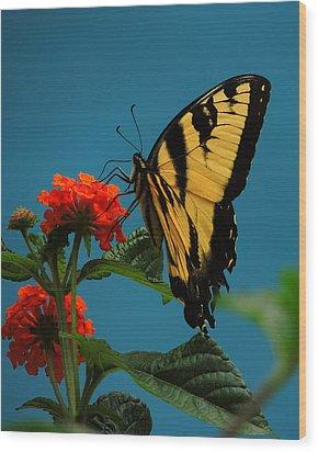 A Butterfly Wood Print by Raymond Salani III