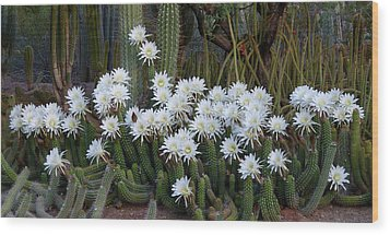 A Cactus Awakening Wood Print by Cindy McDaniel
