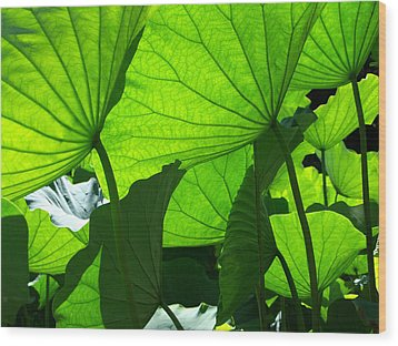 A Canopy Of Lotus Leaves Wood Print by Larry Knipfing