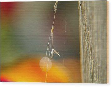 A Captured Dandelion Seed Wood Print by Jeff Swan