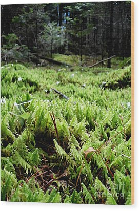 A Carpet Of Moss  Wood Print by Steven Valkenberg