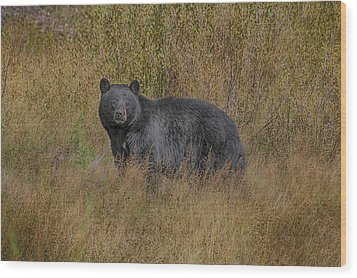 Wood Print featuring the photograph A Casual Glance by Gary Hall