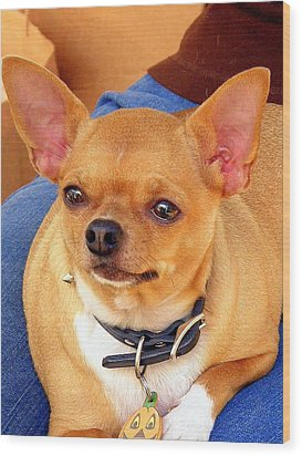 Wood Print featuring the photograph A Chihuahua Named Pumpkin by Antonia Citrino