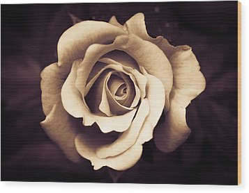 Wood Print featuring the photograph A Chocolate Raspberry Rose by Wade Brooks