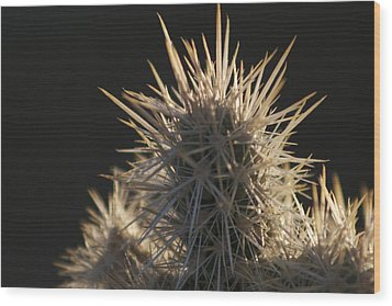 A Cholla Cactus I Wood Print by Carolina Liechtenstein