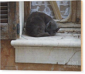 A Circled Up Cat  Wood Print by Lainie Wrightson