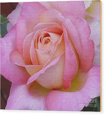 A Classic Rose Wood Print by Paul Clinkunbroomer