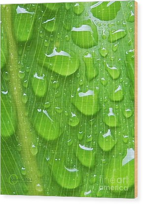 Wood Print featuring the photograph A Cleansing Morning Rain by Robert ONeil